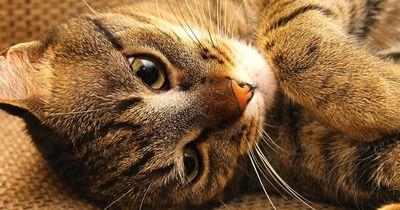 Diese Katze hat eine ungewöhnliche Leidenschaft!