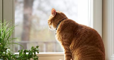 Wie lang darf eine Katze WIRKLICH allein bleiben?