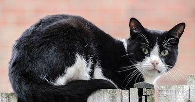 Wir haben es immer gewusst: Katzen studieren uns Menschen!