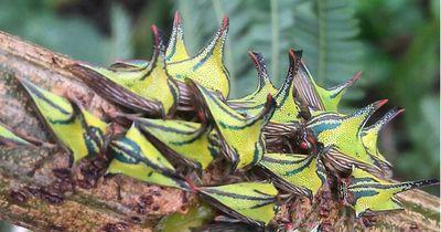 Das sind die abgefahrensten Insekten weltweit!