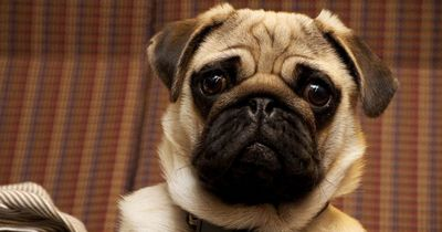 7 Dinge, die du DEFINITIV noch nicht über Hunde wusstest!