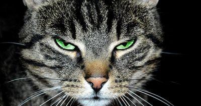 11 GEHEIME FAKTEN über Katzen