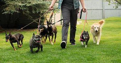 Das sind die 6 beliebtesten Hundenamen!