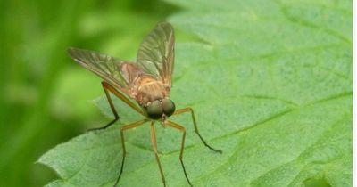 Es wird wieder wärmer: So hältst du lästige Mücken aus deinem Haus fern!