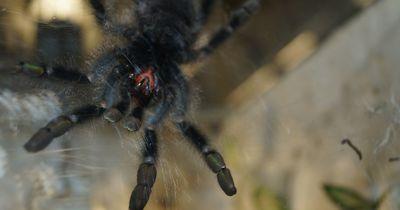 Was würde passieren, wenn alle Spinnen von dieser Welt verschwinden würden?