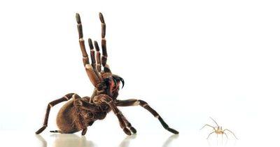 Die 6 gewaltigsten Lügen über Spinnen