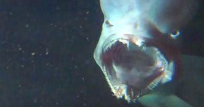 Das sind die unheimlichsten Hai-Arten überhaupt!