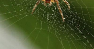 Das stärkste Netz der Welt - die Spinnen sind absolut irre!