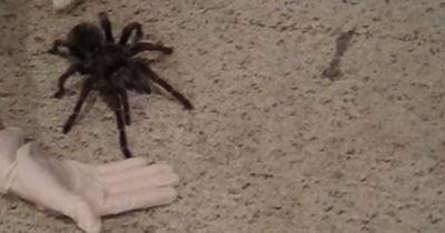 Diese Spinne ist einfach RIESIG!