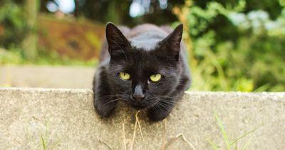 Schwarze Katzen bringen Unglück - woher stammt dieser Irrglaube?