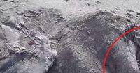 Unbekannte Kreatur am Strand von Neuseeland gefunden!