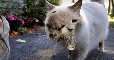 Die 10 erschreckendsten Tier-MUTATIONEN  :-O