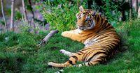 Was ist noch cooler als mächtige Tierattacken?