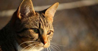Diese Dinge hast du noch nicht über deine Katze gewusst!