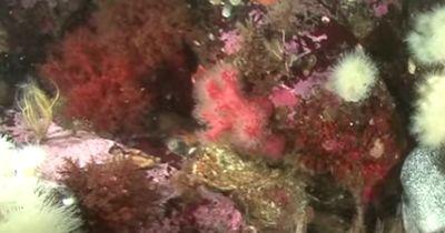Dieser Taucher begegnet einem RIESIGEN Tier Unterwasser!