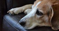Experten warnen: 25% aller Hunde leiden an Depressionen - das sind die häufigsten Gründe!