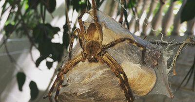 Wie entfernt man Spinnennester richtig?