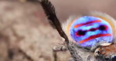 Das ist die SÜßESTE Spinne der Welt