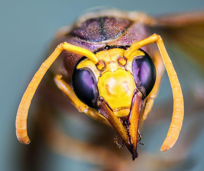 Diese Insekten sind echt gefährlich!