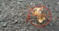 Dieses merkwürdige Insekt wurde mitten auf der Straße gesichtet!