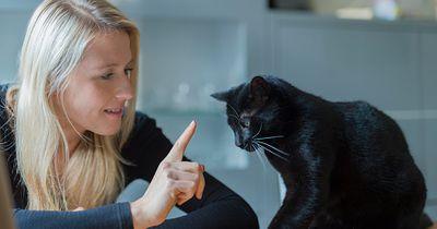 Dieser TRICK verbessert das Verhältnis zwischen deiner Katze und dir!