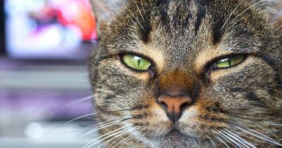 9 wichtige Jobs, die NUR deine Katze ausführen kann!