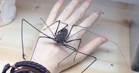 Er hat eine wirklich ungewöhnliche Spinne als Haustier