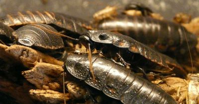 Das sind die größten Insekten der Welt!