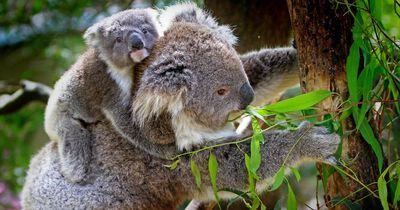9 verrückte Fakten über niedliche Tiere