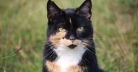 Was denken Katzen eigentlich über uns Menschen?
