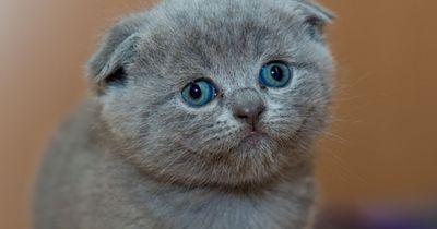 Giftig: DAS darf Deine Katze auf keinen Fall naschen!