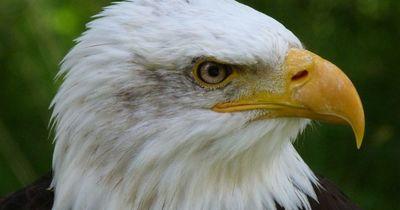 Schock! Sind Vögel so intelligent wie wir Menschen?!