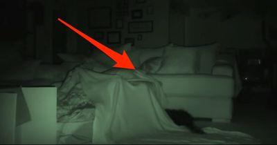 Das machen Katzen bei Nacht wirklich