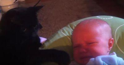 Das Baby weint und möchte nicht einschlafen – und dann macht die Katze DAS!
