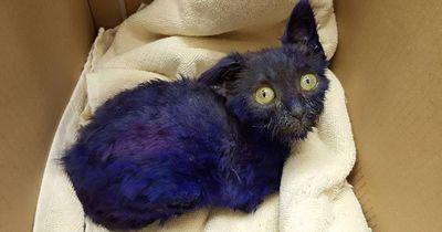 Diese lilane Katze wurde stark mißhandelt