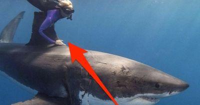 10 Fakten über Haie der etwas anderen Art