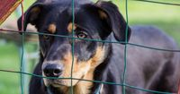 7 Gründe, warum du einen Hund aus dem Tierheim adoptieren solltest!