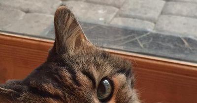 Diese Katze ist 121 Jahre alt - und sie lebt immer noch!