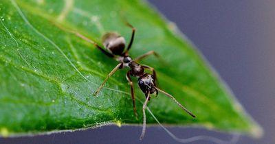 Klein aber oho: 7 skurrile Fakten über Ameisen!