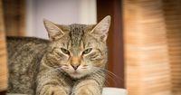 Diese Katze hat eine extrem merkwürdige Angewohnheit, die niemand versteht.