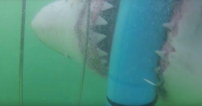 Diese Mädels kamen einem Hai extrem nahe!