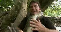 Wie stark ist eine Würgeschlange wirklich?