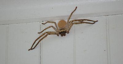 Diese Spinnen-Stories sind wirklich zum Kreischen