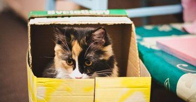 Wie Katzen WIRKLICH miteinander kommunizieren