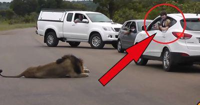 DARUM sollte man bei einer Safari im Auto bleiben!