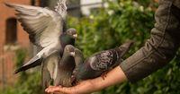 Die 9 kuriosesten Tiergesetze der Welt!