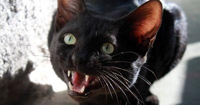 Wie deine Katze aufhört, Möbel zu zerkratzen!