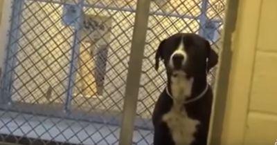 Seit Wochen wartet dieser Hund einsam und alleine darauf, dass sein trauriges Leben ein Ende nimmt!