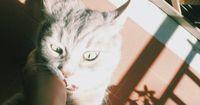 Wie geht man mit einer AGGRESSIVEN Katze um?