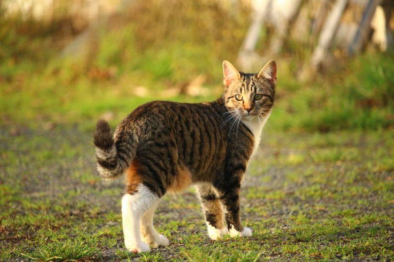 Diese Katze ist geradezu winzig!